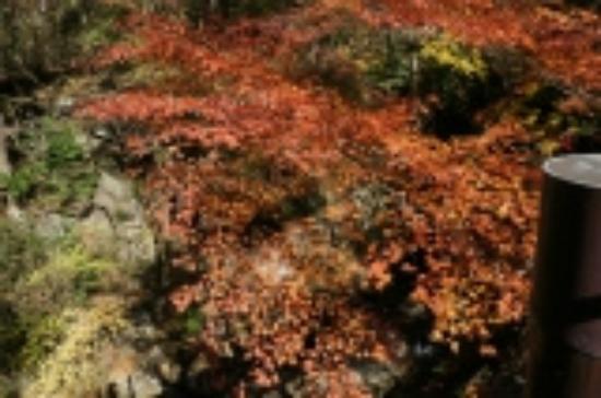 Hananuki Valley: 渓谷に紅葉
