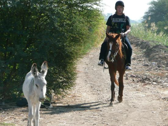 Nobi Stables - Luxorstables: Baby donkey that followed us down the track!