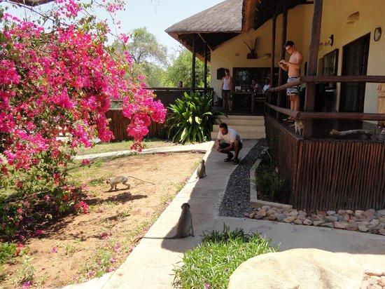 Kurhula Wildlife Lodge: mijn zicht op de lodge en stukje tuin va kmr 1