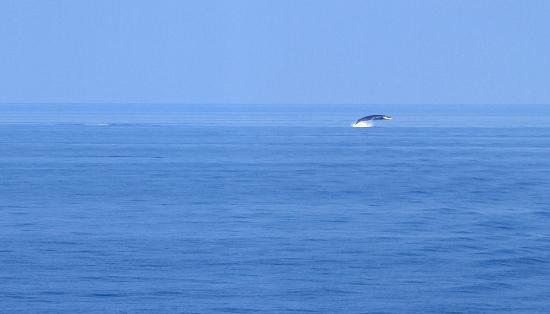 L'Escale Plage : Baleine au large des côtes de la Corse