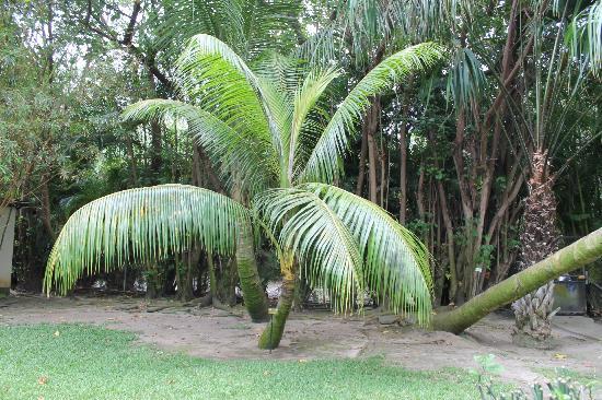 Palmiers picture of jardin d 39 eden saint gilles les for Le jardin d eden
