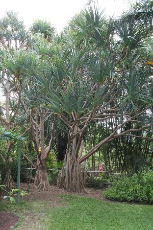 Palmier picture of jardin d 39 eden saint gilles les bains for Le jardin d eden