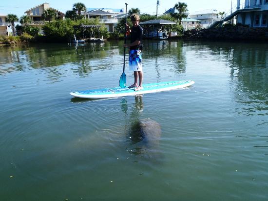 Maui B S Paddleboard Orlando Daytona New Smyrna Cocoa Beach Eco Tours