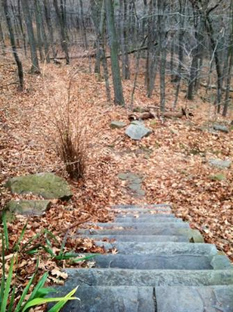 East Rock Park: One of the trails.