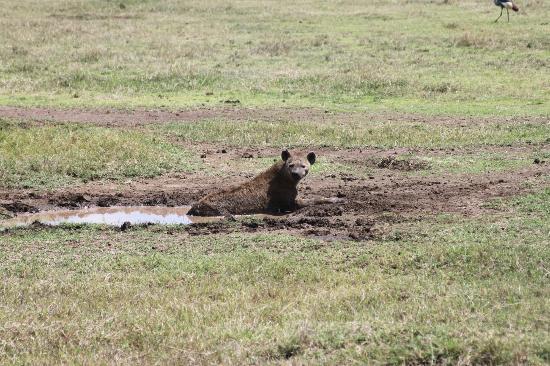Mount Kibo: Ngorongoro Crater