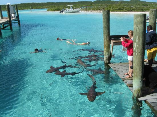 Augusta Bay Bahamas: Swimming with nurse sharks at Compass Cay