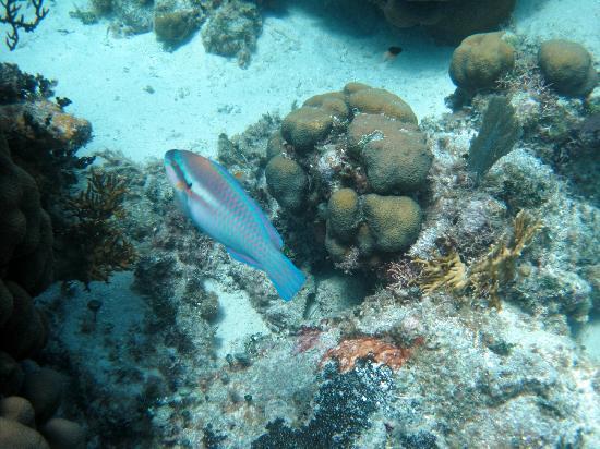 Carlos Tours: fish