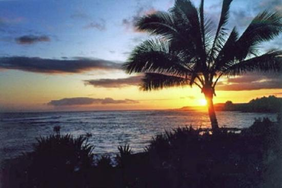 Kuhio Shores Condos: Sunset from Grounds