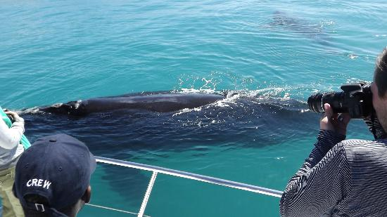 Southern Right Charters: up close to Whales !