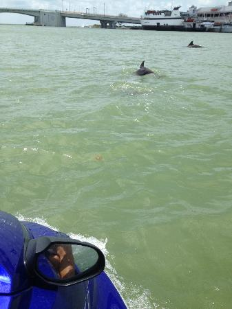 Woody's Watersports: Maybe you can see some dolphins!