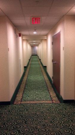 Courtyard Chicago Schaumburg: Hotel Hallway
