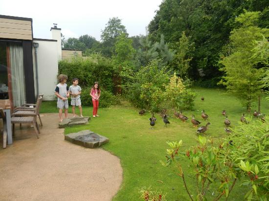 Unser Garten Picture Of Center Parcs Het Heijderbos Heijen