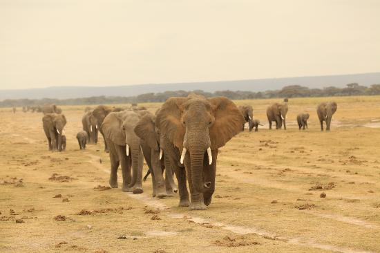 Porini Amboseli Camp: These elephants came by our truck