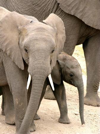 Porini Amboseli Camp: Babies