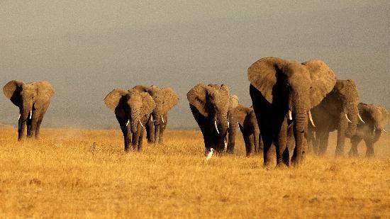 Porini Amboseli Camp : We saw these near sun down