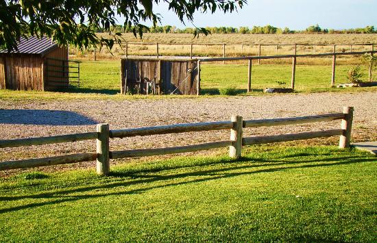 Morley's Acres Farm and Bed & Breakfast: Guest Pasture