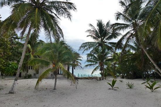 El Paraiso Tulum: vista desde la salida de la habitacion