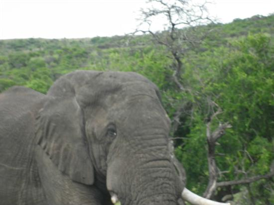 Nambiti Hills Private Game Lodge: Local Resident