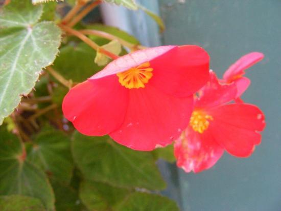 كلاركس هوتل شيملا: flower in corridor 