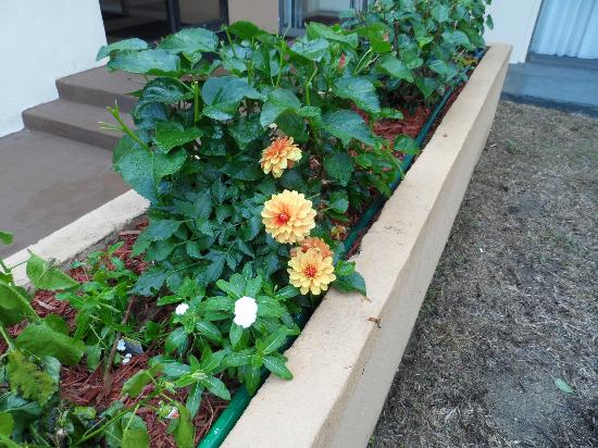 Quality Inn & Suites: Lovely flower box