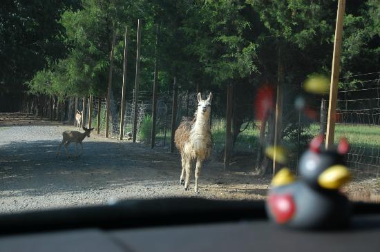 Harmony Park Safari: awww...