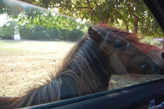 Harmony Park Safari: horses