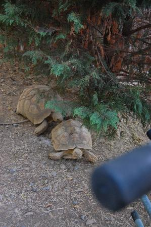 Harmony Park Safari: where else can you feed turtles