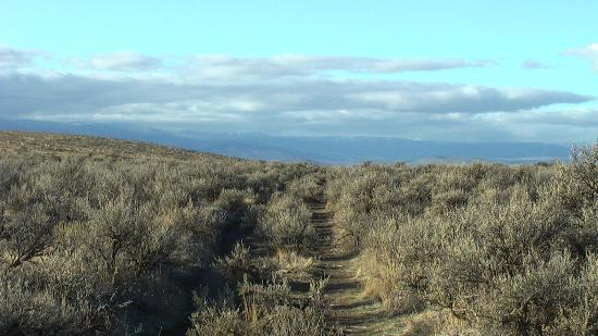 National Historic Oregon Trail Interpretive Center : Ruts