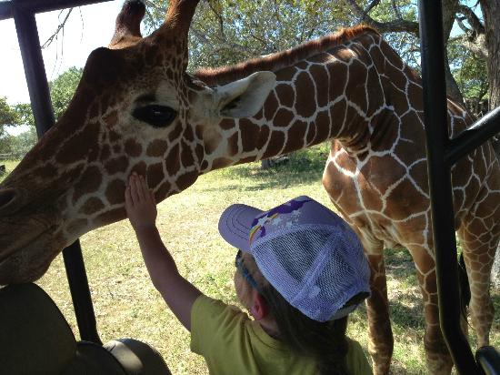 ‪‪Africa Safari‬: petting giraffe