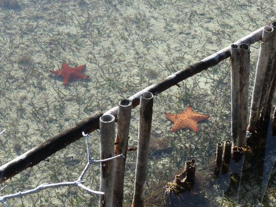 Thatch Caye Resort: my pet star fish that hung outside my room.