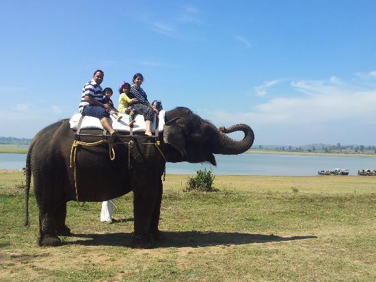 Orange County Resorts Kabini: meenakshai orange county elephant
