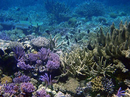 Truk Lagoon: Faichuk islands
