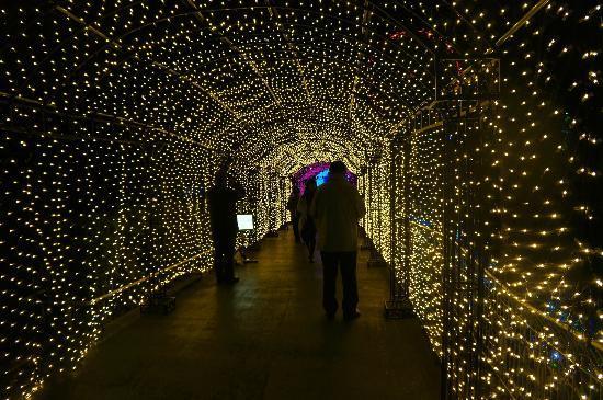 Tokorozawa, Japonya: イルミネーションのトンネル