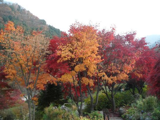 Gapyeong-gun, Zuid-Korea: The maple beuty in early November