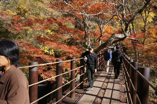 高萩市, 茨城県, 汐見滝吊り橋