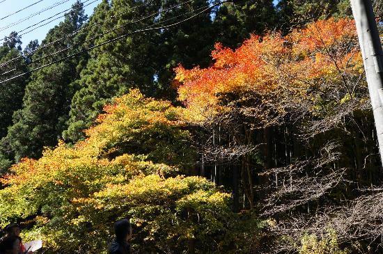 Hananuki Valley: 陽を受けて輝く・・・