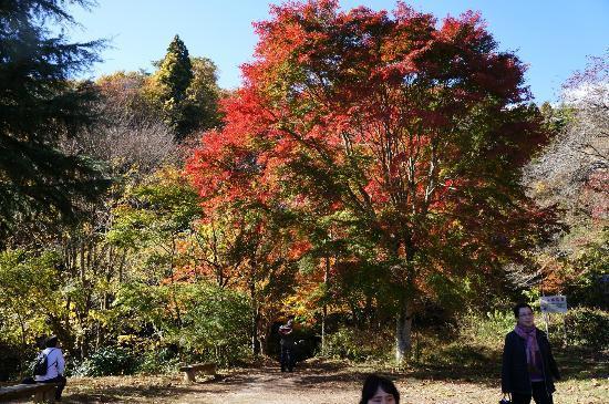 Hananuki Valley: 駐車場近くの紅葉