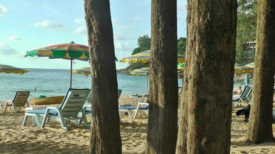 Naithonburi Beach Resort : Сосны на пляже.