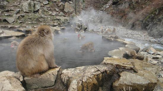 Ryokan Biyunoyado: Monkey Park