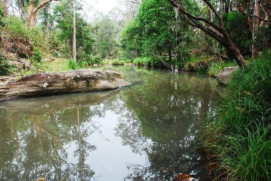 Mt Barney Lodge Country Retreat: swimming hole near camp ground