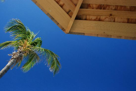Nisbet Plantation Beach Club: View from lounger when waking up