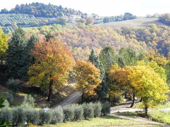 "Podere Caldaruccio ""La Pineta"": vista dalla camera"