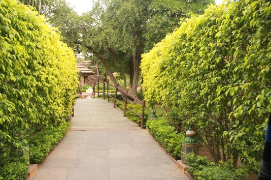 Ajit Bhawan: walkways leading to cottages