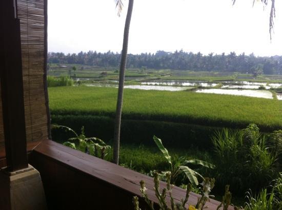 Alam Jiwa: Reisfeld-Blick von der Hamomanterrasse