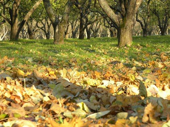 Kolomenskoye Historical and Architectural Museum and Reserve: Яблоневый сад в октябре