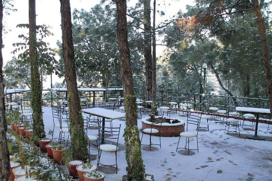 Pictures of Pine Drive Resort - Kumarhatti Photos - Tripadvisor