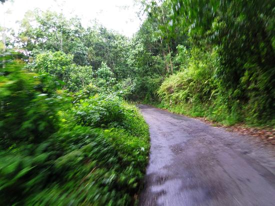 The Beautiful Jamaican Countryside Picture Of Chukka