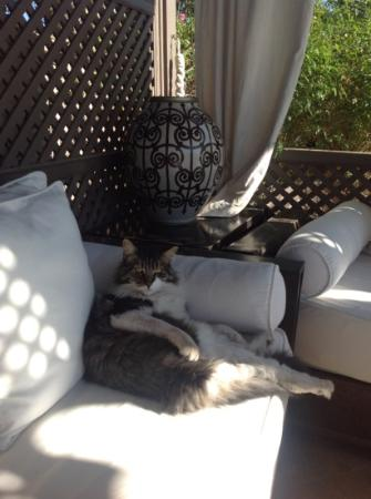 Riad Noir d'Ivoire: such a lovely cat on the terrace