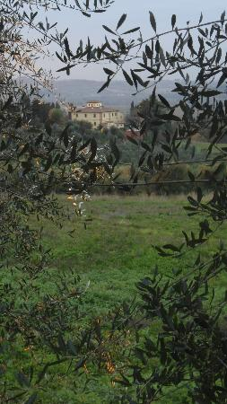 I Moricci: In the midst of the olives...