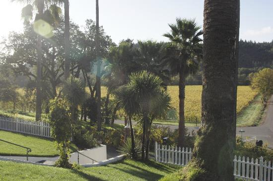 The Raford Inn Bed and Breakfast: Palm Trees